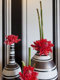 The red flower in the vase. Black and white background Royalty Free Stock Images