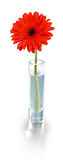 Red flower in vase - clipping path Stock Image