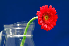 Red flower in a vase Stock Image