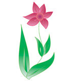Red flower. Vector Stock Images