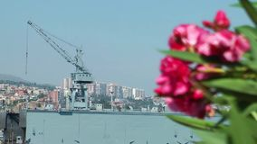 Red Flower and war ship. Video stock footage