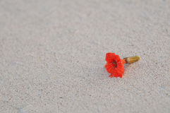 Red flower washed up on caribbean beach Stock Photos