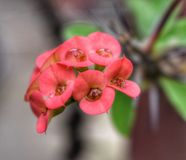 A red flower and water droplets. This is a red flower on garden. Some Red some green and some water stock photography