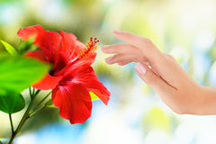 Red flower with woman's hand. On bokeh tropic background Stock Photos
