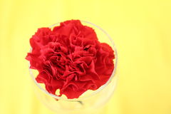 Red flower. With yellow background Stock Photo