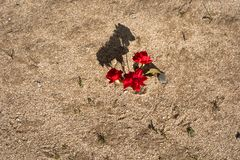 Red flower on yellow sand royalty free stock image