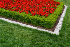 Red flowerbed of white stones on a juicy green grass. Diagonal Red flowerbed of white stones on a juicy green grass Royalty Free Stock Photography