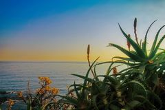 Red flowering agave plants and leaves on mediterranean coast. Stock Image