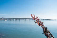Red flowering flax with de-focused Tauranga Harbor and Bridge be Royalty Free Stock Image