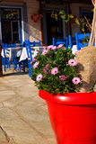 Red flowerpot in greek traditional tavern. Nice red flowerpot with fresh spring flowers in a greek tavern Stock Images
