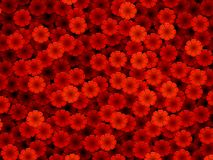 Red flowers. Lots of red illustrated flowers Stock Photography