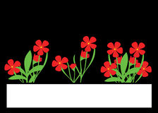 Red flowers Royalty Free Stock Images
