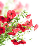 Red flowers Royalty Free Stock Photo