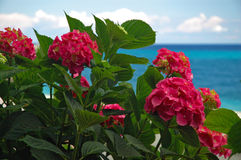 Red flowers. On seacoast background in summer stock photo