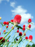 Red flowers. Are growing up Stock Photos