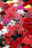 Red flowers. Flowers in the rain at a market stall Royalty Free Stock Images