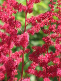 Red flowers. In a garden royalty free stock photos