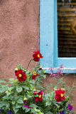 Red Flowers Adorning a New Mexico Window. Bright red flowers accenting a blue frame window set within an adobe wall in Santa Fe, NM Stock Photos