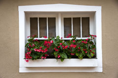 Red Flowers Adorning a New Mexico Window Stock Image