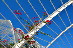 Red flowers and architectural detail of L`Umbracle,Valencia Stock Photos