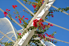 Red flowers and architectural detail of L`Umbracle,Valencia Royalty Free Stock Image