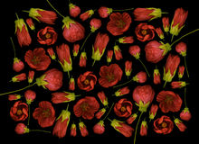 Red flowers background Royalty Free Stock Photos