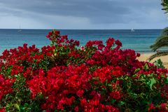 Red flowers in the background a beach. By the sea Stock Images