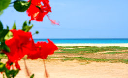 Red flowers at the beach. Red flowers and beach in the island of Sal in the archipelago of Cape Verde Stock Photos