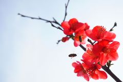 Red flowers and two bees in the blue sky