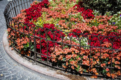 Red flowers behind the metal  fence in the park Royalty Free Stock Photo