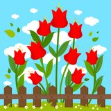 Red flowers behind wooden fence. Green meadow landscape with red tulip flowers behind wooden fence. Vector illustration Stock Images