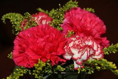 Red flowers on black background royalty free stock photography