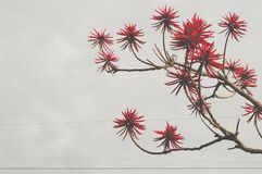Red Flowers Bloomed Front Brown Tree Branch Stock Photo