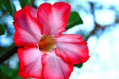 Red flowers are blooming. Royalty Free Stock Images