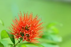 Red flowers blooming. Flowers blooming garden, blurred nature background royalty free stock images