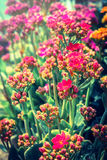 Red flowers blossom. Royalty Free Stock Image