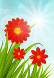 Red flowers on blue shiny sky Royalty Free Stock Photography