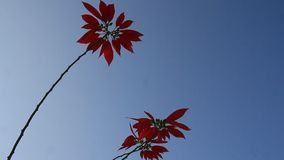 Red flowers and blue sky. The red flowers and blue sky stock video footage