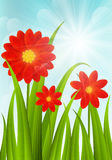 Red flowers on blue sky background Royalty Free Stock Images