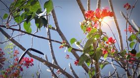 Red Flowers On Blue Sky. Branches and the wind stock footage