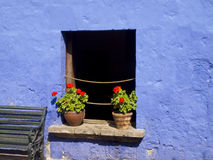 Red flowers on blue wall Stock Photography