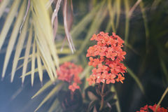 Red flowers on blurred background. Photograph of some red flowers on a blurred background Royalty Free Stock Photo