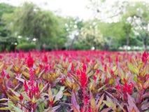 Hornbill flowers on the garden park and bokeh background stock images