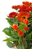 Red flowers bouquet Royalty Free Stock Images