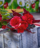 Red flowers in a box. Red flowers in a wooden box Royalty Free Stock Photo