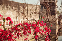 Red flowers on the branches of trees. Beautiful flowers on the branches of trees in the background the towers of the old palace in India stock image