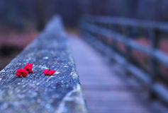 Red flowers on bridge Royalty Free Stock Photography