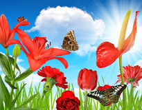 Red flowers with butterflies Royalty Free Stock Photos