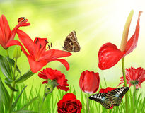 Red flowers with butterflies Stock Image