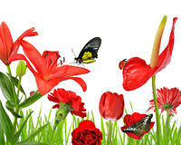 Red flowers with butterflies and ladybug. Isolated on white background Royalty Free Stock Photos